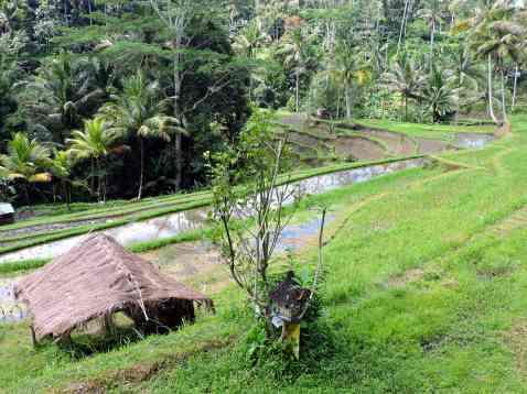 01-Bali-TN-Gunung-Kawi- (12)-min