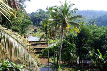 02-Bali-Gunung-Kawi (4)