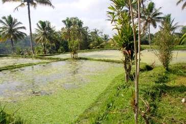 02-Bali-Gunung-Kawi (6)