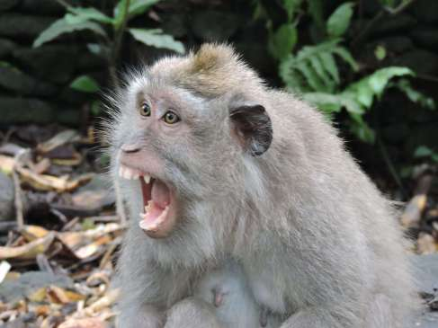04-Bali-Ubud-Monkey Forest-Monos- (2)-min