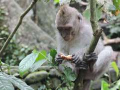 04-Bali-Ubud-Monkey Forest-Monos- (8)-min