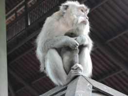04-Bali-Ubud-Monkey Forest-Monos- (9)-min