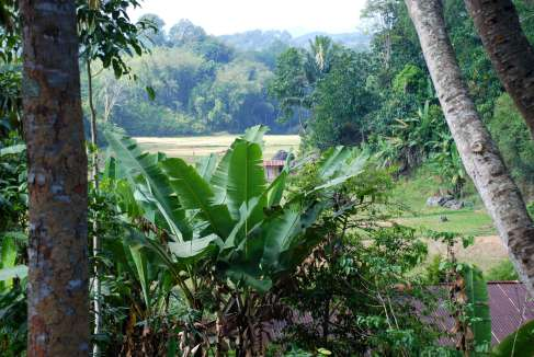 01-Indonesia-Sulawesi-Lemo (3)