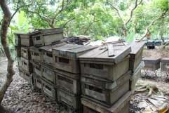 04-Vietnam-Mekong-Plantación-Espacias (2)
