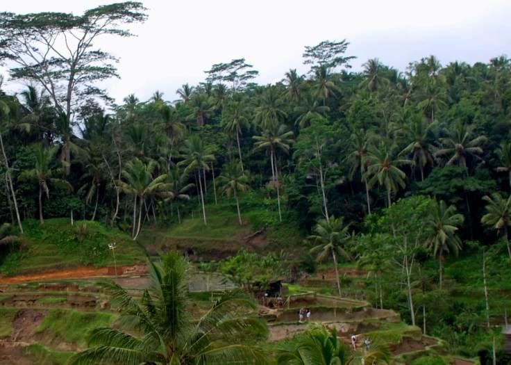 05-Bali-Tadagalang (1)