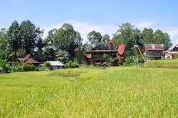 10-Indonesia-Sulawesi-Deri (5)
