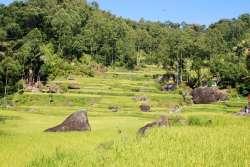 10-Indonesia-Sulawesi-Deri (7)
