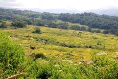 11-Indonesia-Sulawesi-LempoyBututumonga (10)