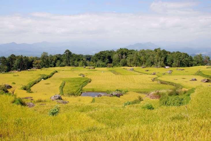 11-Indonesia-Sulawesi-LempoyBututumonga (12)