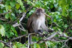 11-Tailandia-Monkey-Bay (11)