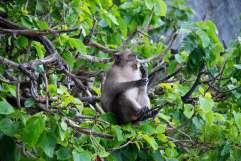 11-Tailandia-Monkey-Bay (13)