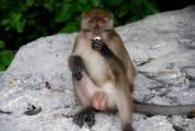 11-Tailandia-Monkey-Bay (24)