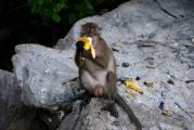 11-Tailandia-Monkey-Bay (38)
