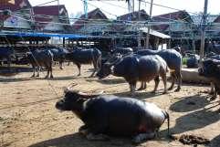 16-Indonesia-Sulawesi-Mercado-Boru (14)