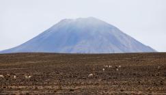 02-Peru-Antiplano-Pampa Cañahuas (20)
