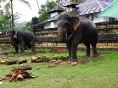 12-Sri-Lanka-Kandy-08