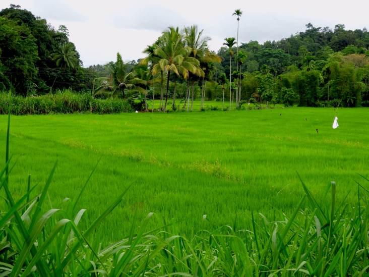 15-Sri-Lanka-Tierras-Altas-01