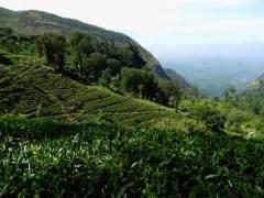 15-Sri-Lanka-Tierras-Altas-04