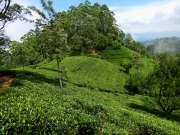 16-Sri-Lanka-Tierras-Altas-Campos-de-Te-02