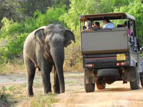 18-Sri-Lanka-Yala-PN- (1)