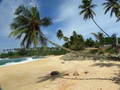 21-Sri-Lanka-Playa-Sur- (3)-Tangalla