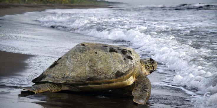 SJO-observation-des-tortues-a-tortuguero-2_1-1280x640