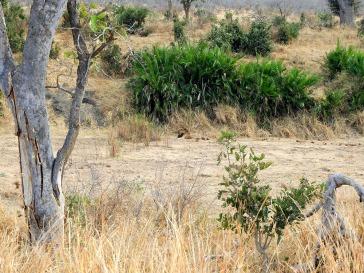 12-SD-Kruger-Satara-0 (74)