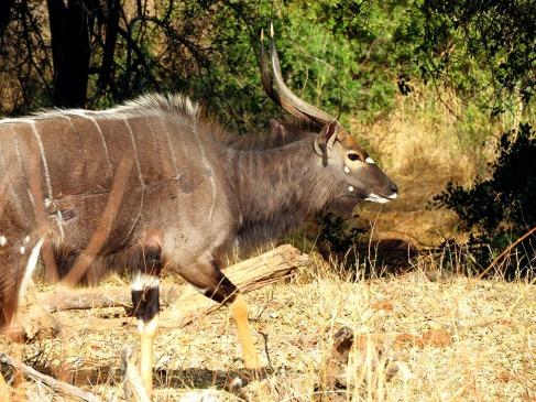 12-SD-Kruger-Skukuza-0 (126)