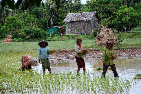 02-Camboya-Siem-Reap-03-Arrozales-0 (48)
